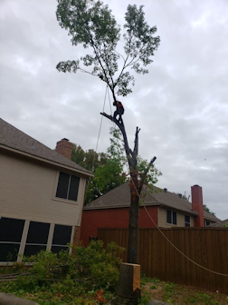 Martinez Tree Service Tree Services Lawn & Landscaping Carrollton Texas North Dallas